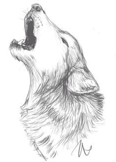 Wolves For Drawing Sketch - Wolf Drawing Idea Wolf Sketch Sketches Animal Drawings White Wolf Sketch By Idess Ideias Para Desenho Desenhos Free 21 Wolf Drawings In Ai Sketch A Wo. Pencil Art Drawings, Art Drawings Sketches, Cool Drawings, Tattoo Sketches, Easy Animal Drawings, Sketch Art, Animal Sketches Easy, Elephant Drawings, Fantasy Drawings