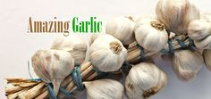 The Amazing Benefits of Garlic for Our Lives
