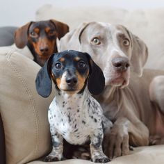 Indiana, Cute Little Reese & Harlow