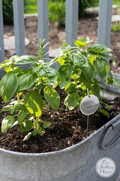 Now Ann from On Sutton Place is going to show you how to turn a galvanized tub into a fabulous Herb Garden!!!  This one is for me…I will be filling up a few of them…my tomato sauce will be very happy with the fresh basil.  ENJOY!