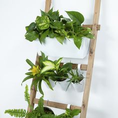 This indoor ladder garden is easy to put together and it adds so much green to your home! Click the picture to see more amazing home decor ideas. House Plants Decor, Plant Decor, Diy Magazine Holder, Diy Home Decor Easy, Plant Wall, Garden Furniture, Outdoor Furniture, Furniture Sets, Modern Furniture