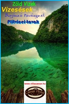 A plitvicei tavak zöld vize, a burjánzó növényzet és a vízesések