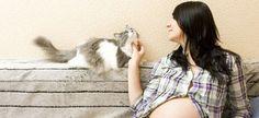 Las 5 leyendas urbanas más conocidas sobre los gatos ¿tienen fundamento?