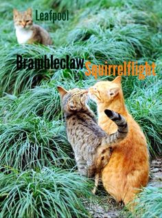 Brambleclaw and Squirrelflight were meant for each other! To bad they unmated in the end! I feel bad for Leafpool in this pic! She's probably thinking about Crowfeather!