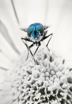 Macro photography insect print insect canvas. by SophieTakesPhotos