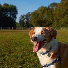 Off Leash Dog Park Huntsville Alabama