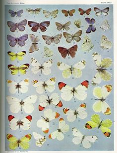 rare book collection of botanical & butterfly printables - Nest of Posies