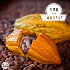 Chocolat mon amour - Épisode 6 : La cabosse du cacaoyer - sur France Bleu
