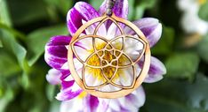 #Halskette #Venusblume     GUFRU Venus, Fair Grounds, Neck Chain, Hang In There, Flowers, Venus Symbol