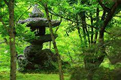 緑の時期の京都永観堂。青もみじと�