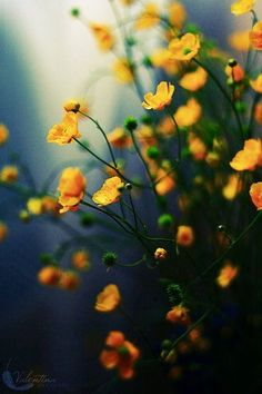 I love those little yellow flowers! Love Flowers, Yellow Flowers, Wild Flowers, Beautiful Flowers, Spring Flowers, Flower Phone Wallpaper, Nature Wallpaper, Trendy Wallpaper, Pretty Wallpapers