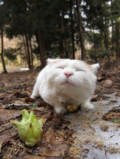 oooohhh.......what a HAPPY cat!