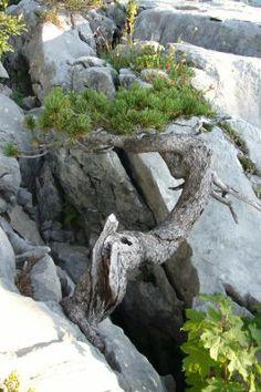 Feel-Spirit-l'Esprit de Phil.[Bonsaï]: Balade en Montagne. Images de Yamadori