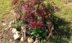 Just one small portion of what I planted and hope to add to on my unusually large hill. I think it may take me a while!