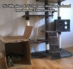 Pardon the language in the photo, but this is definitely the way cats behave...they prefer the free box to the expensive cat tower!
