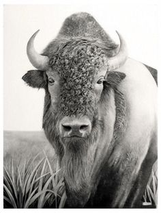 JLFottrellArtist - PENCIL DRAWINGS #AnimalArt #Art
