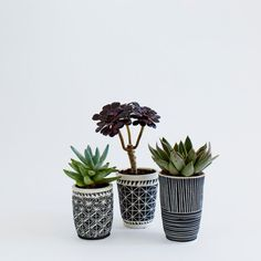 Black and white sgraffito planters