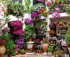 Garden in planters and in pots by the front door.