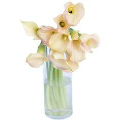 FiftyFlowers.com - Passion Peach Coral Calla Lily Flower