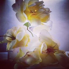 Nick Knight @showstudio_nick_knight Roses from my gar...Instagram photo | Websta (Webstagram)