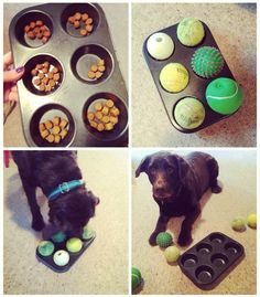 The muffin tin game is the perfect easy-to-make DIY boredom buster for every dog; your little pups will never get tired of this entertaining activity!