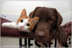 Best friends never have the same nature..... They just have best understanding of their differences