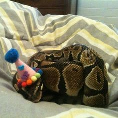 I didn't think snakes could be cute, until I saw one in a party hat. - Imgur