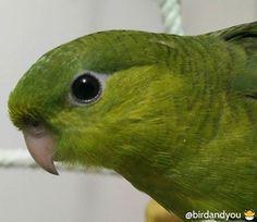 Le rescapé: l'histoire d'un bébé perruche catherine
