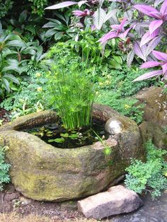 Some gardeners never spend a minute thinking about design. Others (like me) can spend a year finding the perfect spot for a rock. The person who created the garden shown above, definitely thought a lot about design. If you have a shady place in your yard, you can steal some great ideas from this little jewelbox of a garden. Foliage color. Shade gardens are always more about