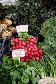"""Detox foods  """"Let food be thy medicine and medicine be thy food.""""  Hippocrates ca. 400 BC"""