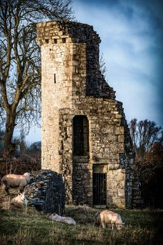 Priory Wall tower no Landscape Photography, Landscapes, Tower, David, Building, Wall, Travel, Paisajes, Scenery