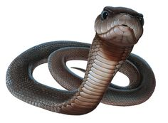 Black Mamba Snake Wallpapers | Black Mamba Snake Wallpapers HD ...