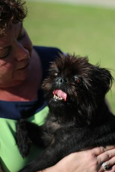 Maggie Mae  HAPPY GIRL Photo shoot for 2016 Affenpinscher Rescue Calendar