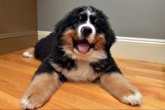Fluffy Puppy   Cutest Paw