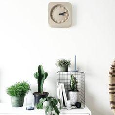 2,052 vind-ik-leuks, 21 reacties - Van het kastje naar de muur (@milou_nieuwenhuis) op Instagram: 'The plant gang keeps expanding 🌵🌱🌿 • #urbanjungle #plants #sostrenegrene #housedoctor #wonenmetlef…'
