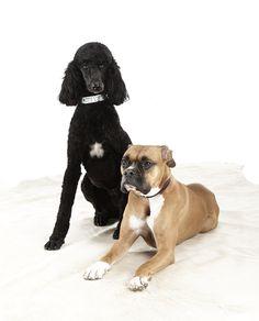BRAVE Leather Pet Collars