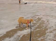 Canova Beach Dog Park: The only legal dog beach in Brevard County, FL, but done very well. - See 81 traveler reviews, 18 candid photos, and great deals for Indian Harbour Beach, FL, at TripAdvisor.