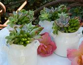 Succulent Wedding Favor, Succulent Bridal Shower Favor, Rustic Wedding Favor, Succulent Plants, Garden Party Favor, Mini Succulent. $48.00, via Etsy.