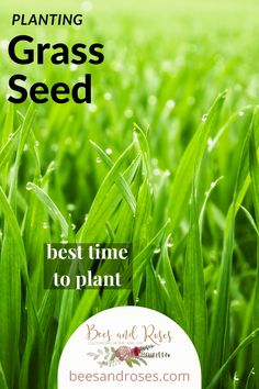 You can save a lot of money (and time, too) if you plant your own grass seed instead of buying sod. But if you do it the wrong way, you might wish you had paid the extra and bought sod. Never fear, I've got you covered (just like your ground will soon be covered with beautiful grass)! #beesandrosesblog #grassplanting101 #helptoplantgrass Fall Lawn Care, Lawn Care Tips, Full Sun Landscaping, Landscaping Ideas, Planting Grass Seed, Lawn Striping, Organic Lawn Care, Landscape Curbing, Lawn Fertilizer