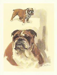 English Bulldog colour print by Willie Bar by OLDBOOKSMAPSPRINTS, £10.00