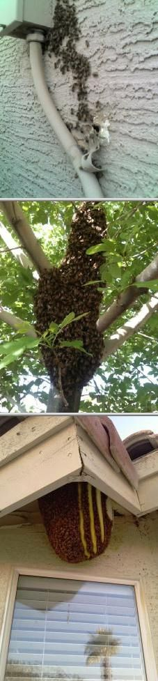 This business started offering bee removal services 7 years ago in your area. They are one of the best pest control companies in Glendale.