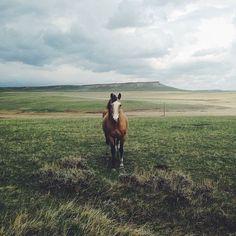 Lone horse on the range. #ranchlife