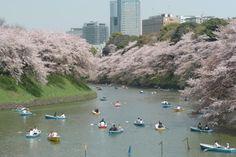 千代田櫻花祭 / 東京的觀光官方網站GO TOKYO