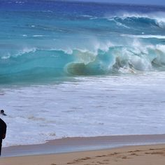 Shandy #basilica #honolulu #surf #surfing #hawaii #basilicaboardshorts #grime #underground #oahu #pasific #ocean #waves #kauai #maui #bigisland #surftilldark #std PC @pepper_vintagewc3 by basilica_hawaii