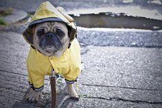 Pets&Love rules: Il freddo incalza...leggete qui come vestire i vostri cuccioli  http://petsandloveitalia.tumblr.com/post/68772226051/come-vestire-i-vostri-cuccioli