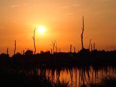 De ondergaande zon in de Alde Feanen bij het verdronken bos. Friesland.the netherlands