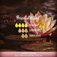 "186 Likes, 39 Comments - Darlene Ryan (@essentially_loving_oils) on Instagram: ""Peaceful Mind Diffuser Blend . Aromatic Profile: Woody 65.2%, Citrus 34.8% Emotion: Very Calming. .…"" #Essentialoildiffusers"
