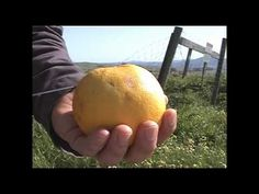How to Make Yerba Mate In a Grapefruit