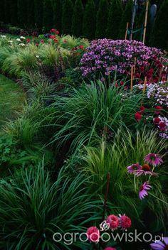 Ogrodowa przygoda Łukasza :) - strona 689 - Forum ogrodnicze - Ogrodowisko