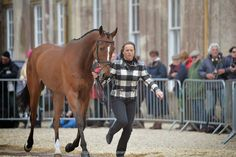 » 1st Inspection Day 2015 » Badminton Horse Trials  Pippa Funnell  at the first vet check with Second Supreme
